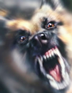 German-shepherd-dog-snarling